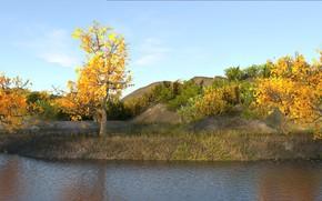Обои коричневый, желтый, трава, деревья, Водоем, осень