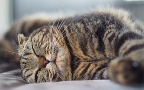 Картинка полосатая кошка, лежит на боку, жмурится