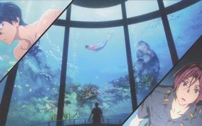 Картинка рыбки, водоросли, встреча, русалка, аквариум, полицейский, mermaid, free, matsuoka rin, nanase haruka, вольный стиль, by …