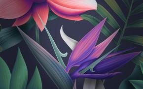 Картинка 1920x1080, mate, floral, huawei, 10_stock