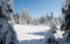 Картинка Зима, Германия, Снег, Winter, Germany, Snow, Harz, Гарц, Сугробы