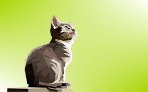 Обои кошка, кот, треугольники, коте