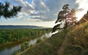 Обои природа, река, утро, дерево
