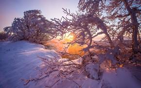 Обои рассвет, восход, Горы Юра, Jura mountains, деревья, зима, Switzerland, снег, Швейцария, утро