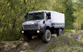 Картинка лес, растительность, Mercedes-Benz, грузовик, бездорожье, 4x4, Unimog, U4000