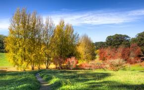 Обои облака, осень, трава, небо, солнце, Австралия, тропинка, кусты, деревья, Mount Lofty Botanic Garden, парк