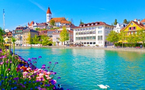 Картинка цветы, река, здания, дома, Швейцария, лебедь, набережная, Switzerland, река Аре, Aare River, Thun, Тун