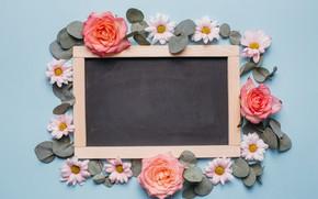 Картинка Лепестки, Розы, Доска, Хризантемы