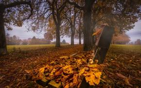 Обои осень, Бад-Вимсбах-Найдхартинг, Bad Wimsbach-Neydharting, каштановая аллея, аллея, Austria, листва, листья, деревья, каштаны, скамейка, Австрия, парк