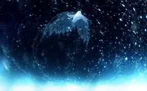 Картинка небо, девушка, крылья, Y_Y