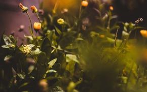 Картинка листья, боке, жёлтые цветы