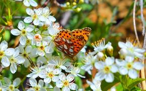 Картинка Макро, Весна, Бабочка, Flowers, Spring, Цветение, Macro, Butterfly, Flowering