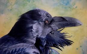 Картинка птица, клюв, ворон