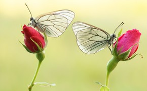 Картинка яркость, расцветка, brightness, бабочка, colors, butterfly