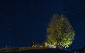 Обои звезды, ночь, дом, дерево