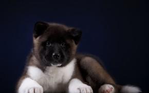 Картинка Собака, Щенок, Фон, Малыш
