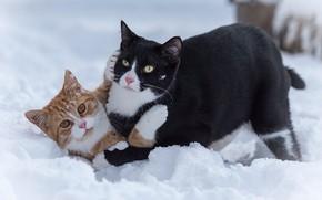 Обои игры, два кота, котейки, снег, коты