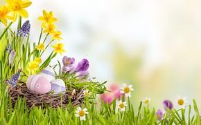 Обои небо, трава, солнце, цветы, корзина, весна, Пасха, flowers, нарциссы, spring, Easter, eggs, decoration, Happy, яйца ...