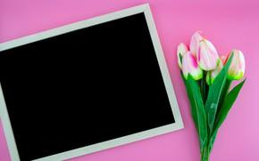 Картинка цветы, тюльпаны, Доска