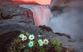 Обои скалы, лето, Исландия, вечер, водопад, горы, свет, цветы