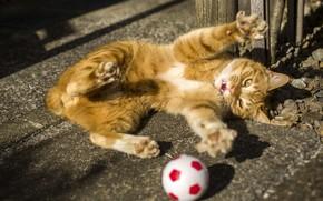 Картинка котенок, рыжий, мячик