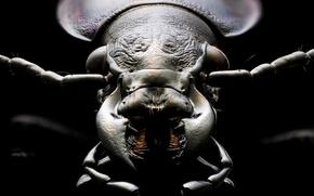 Картинка macro, insect, surreal, coleoptera