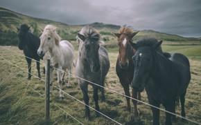 Картинка животные, небо, тучи, лошади