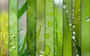 Обои зелень, лето, трава, роса, рендеринг, коллаж, весна, капли дождя