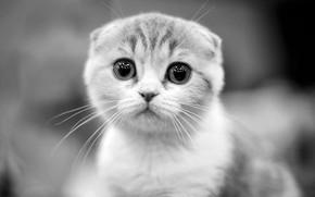 Картинка котенок, милый, Yulia Stahovskaya