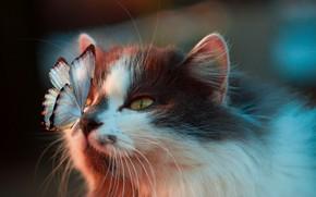 Картинка бабочка, на носу, пятнистая кошка