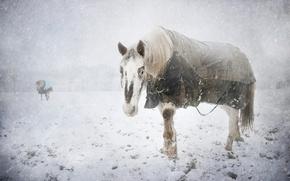 Картинка холод, зима, снег, конь