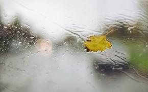 Картинка стекло, капли, лист