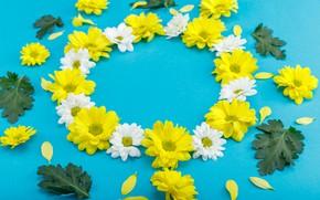 Картинка цветы, Хризантемы, лепестки листья