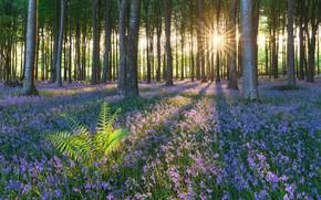 Обои лес, цветы, лето