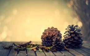 Обои листья, осень, настроение, шишки, боке