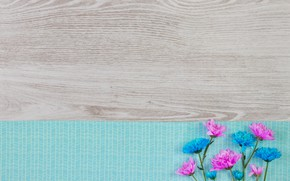 Картинка цветы, colorful, white, хризантемы, wood, blue, pink, flowers