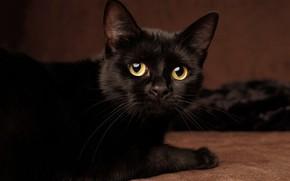 Картинка глаза, кот, усы, черный