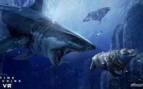 Картинка рыба, акула, бегемот, Time Machine VR