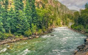 Картинка лес, река, поток