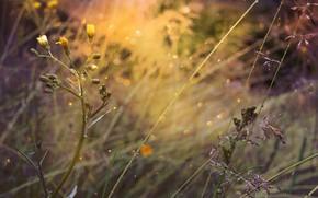 Картинка цветы, природа, боке, by dashakern
