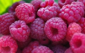 Картинка лакомство, макро, красота, сентябрь, множество, природа, десерт, дача, ягоды, малина, урожай, сладко, услада, осень, позитив