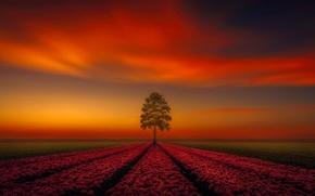 Картинка поле, закат, цветы, дерево