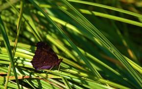 Картинка лето, трава, макро, бабочка