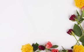 Картинка листья, цветы, розы, colorful, розовые, бутоны, pink, flowers, beautiful, roses, bud