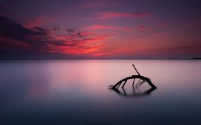 Картинка небо, закат, горизонт, коряга