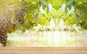 Картинка Листья, Ягоды, Кисть, Виноград