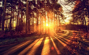 Картинка дорога, осень, лес, свет