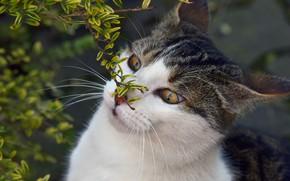 Картинка кошка, глаза, кот, морда, листья, природа, фон, портрет, ветка, весна, дикий взгляд