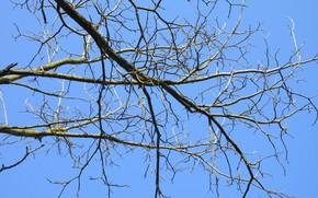 Картинка ветки, дерево, апрель, весна 2018