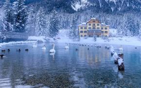 Картинка зима, снег, деревья, птицы, озеро, дом, утки, ели, Альпы, Италия, мостик, лебеди, леса